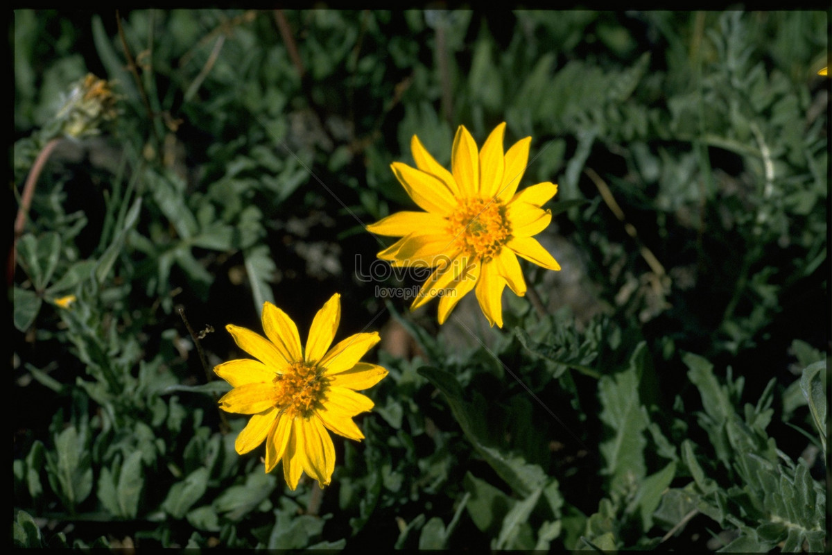 Small Yellow Flowers In The Grass Photo Imagepicture Free Download