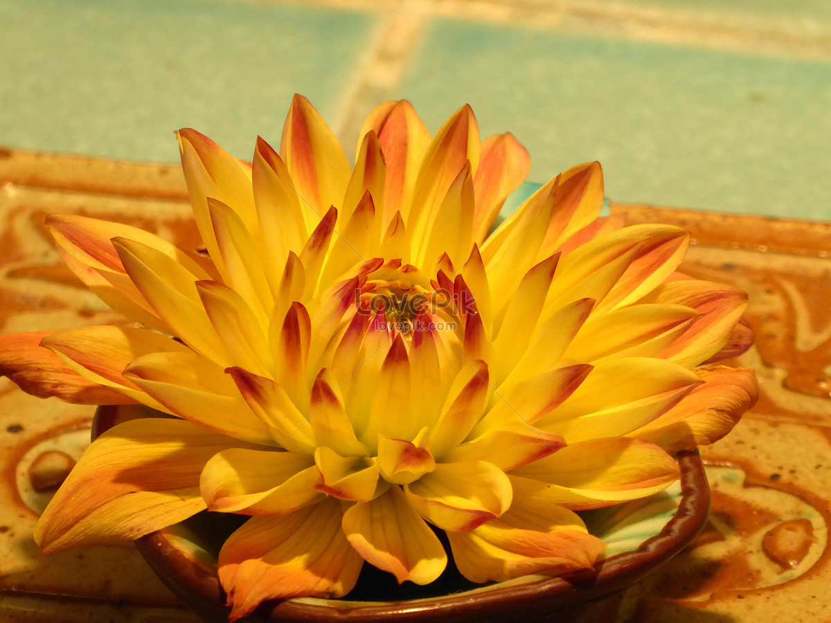 Bright and beautiful yellow flowers photo imagepicture free bright and beautiful yellow flowers izmirmasajfo