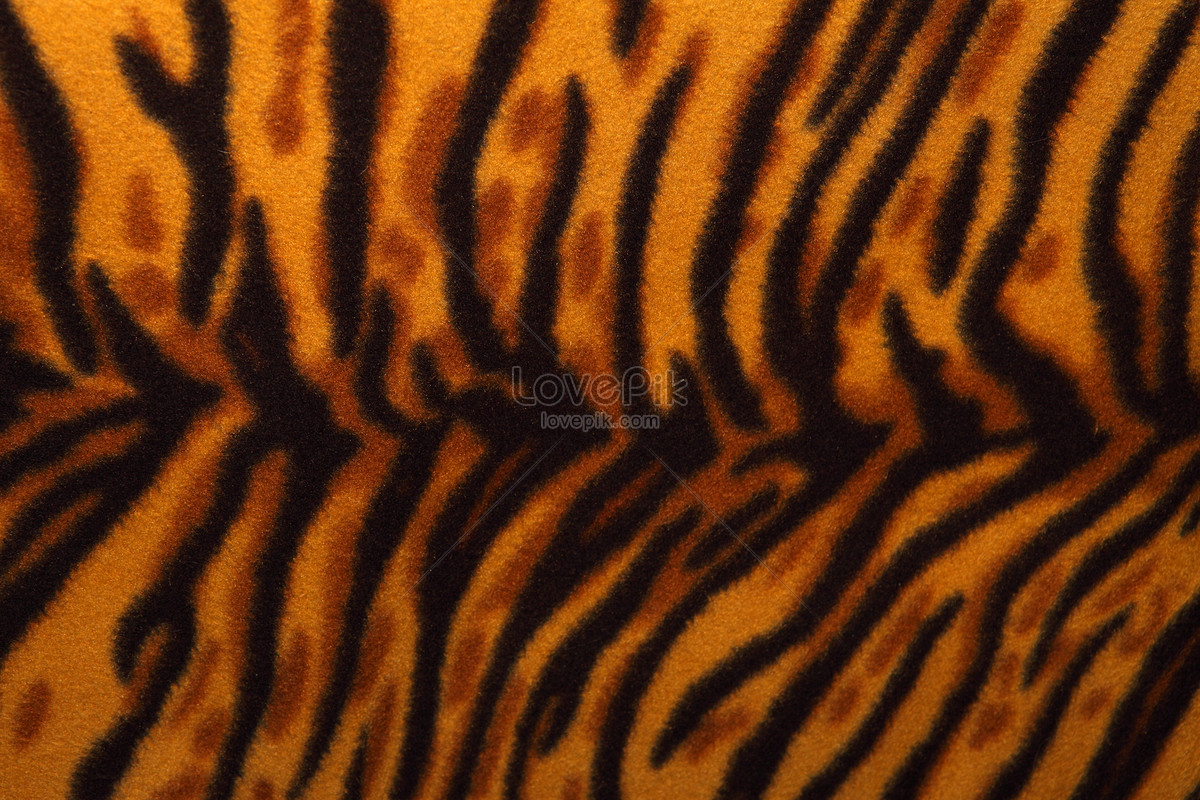 a tigers skin photo image picture free download 100219706
