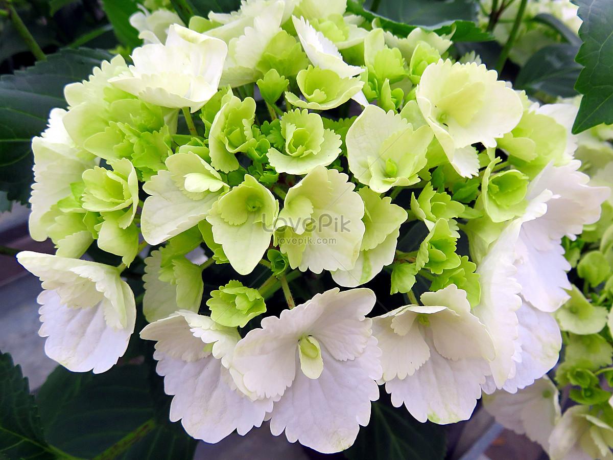 Bunga Hijau Mekar Gambar Unduh Gratis Foto 100224722 Format