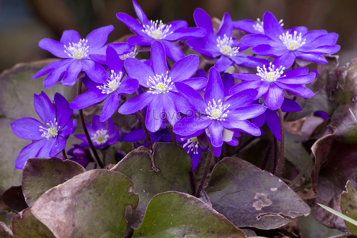 Very Pretty And Charming Flowers Photo Imagepicture Free Download