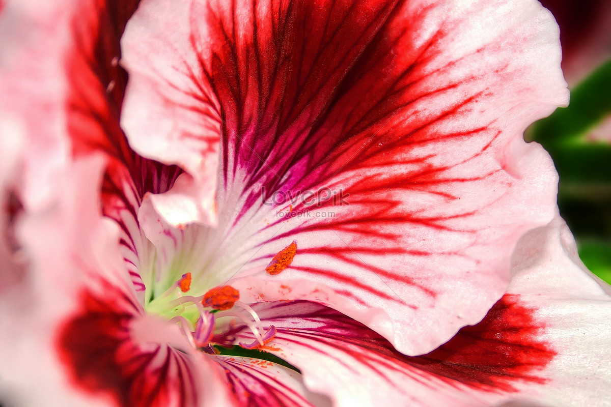 bright red flowers photo image picture free download