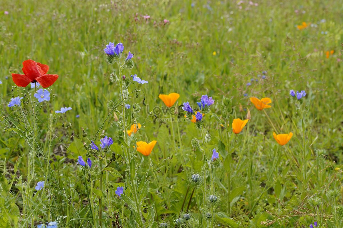 A beautiful wild flower garden photo imagepicture free download a beautiful wild flower garden izmirmasajfo
