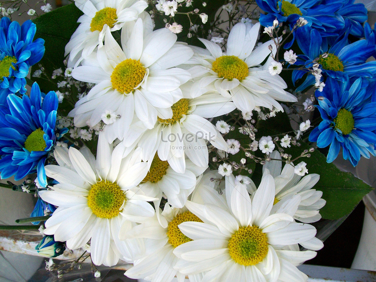 White And Blue Daisy Flower Bouquet Photo Imagepicture Free
