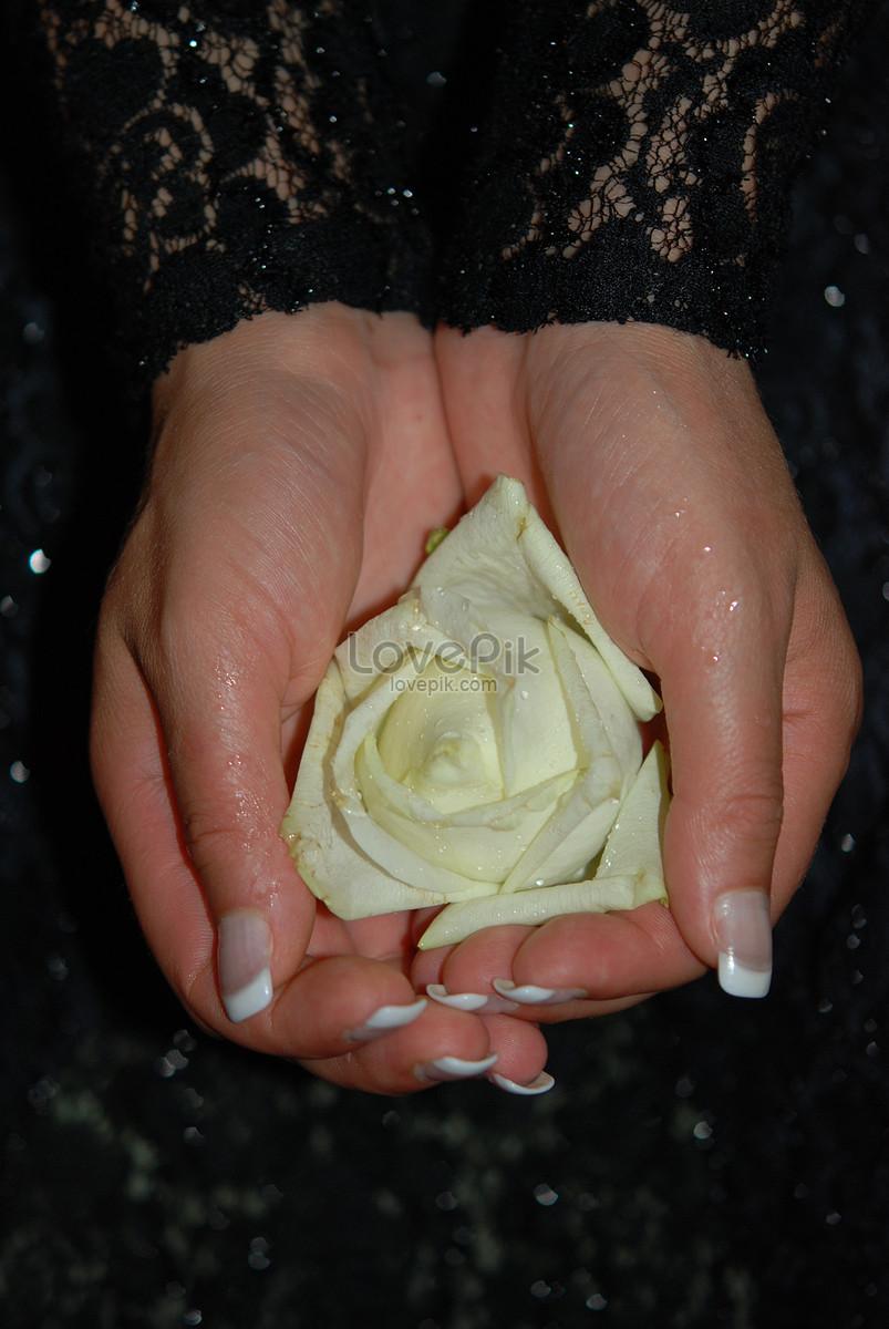 Tangan Memegang Bunga Mawar Yang Indah Gambar Unduh Gratis Imej