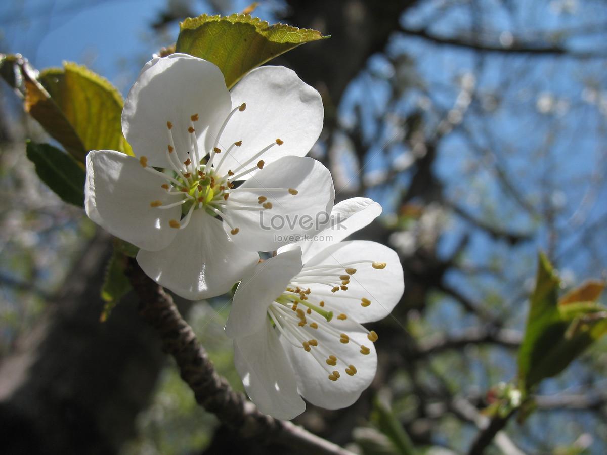Hermosas Flores Blancas Imagen Descargar Foto 100274241 Jpg Imagen