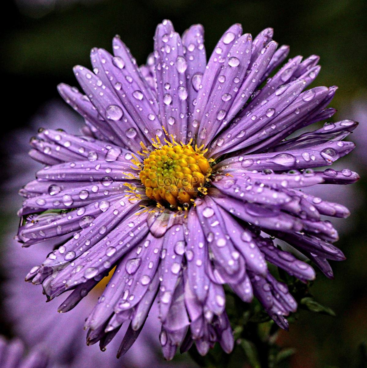 О росинке на цветке