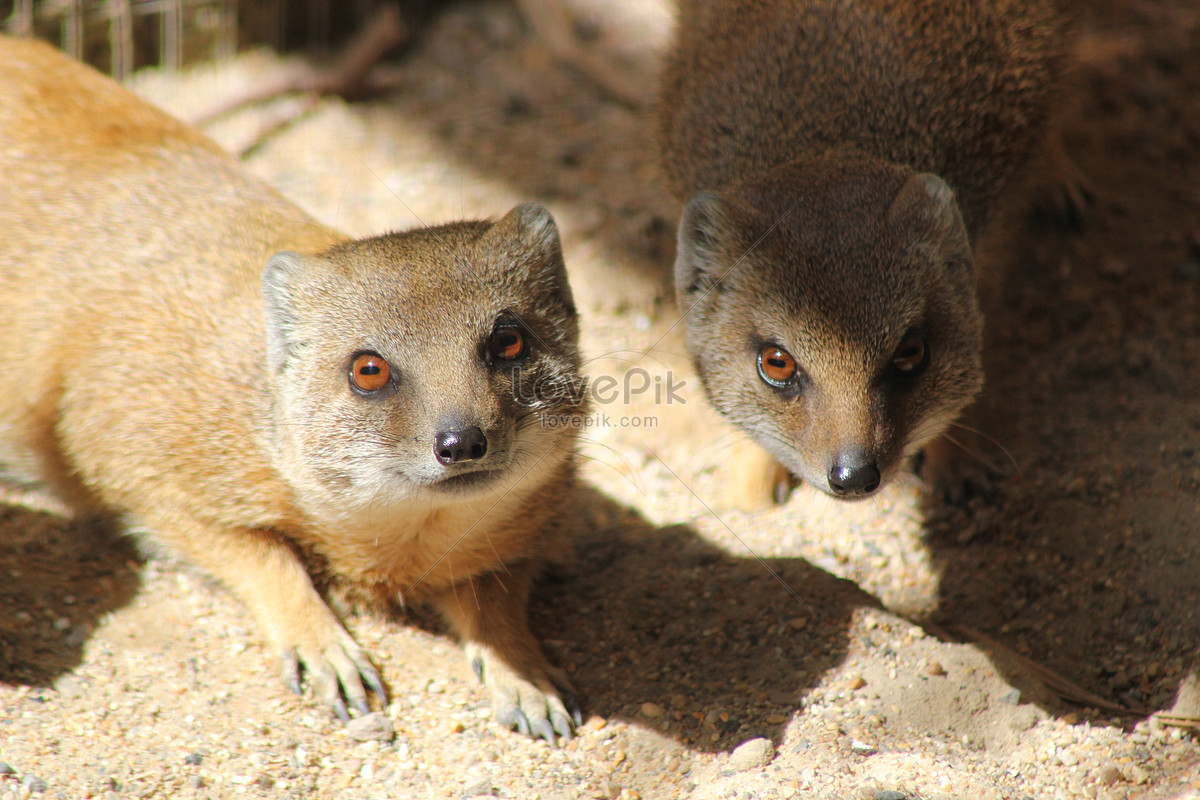 four eyes of two animals photo image_picture free download