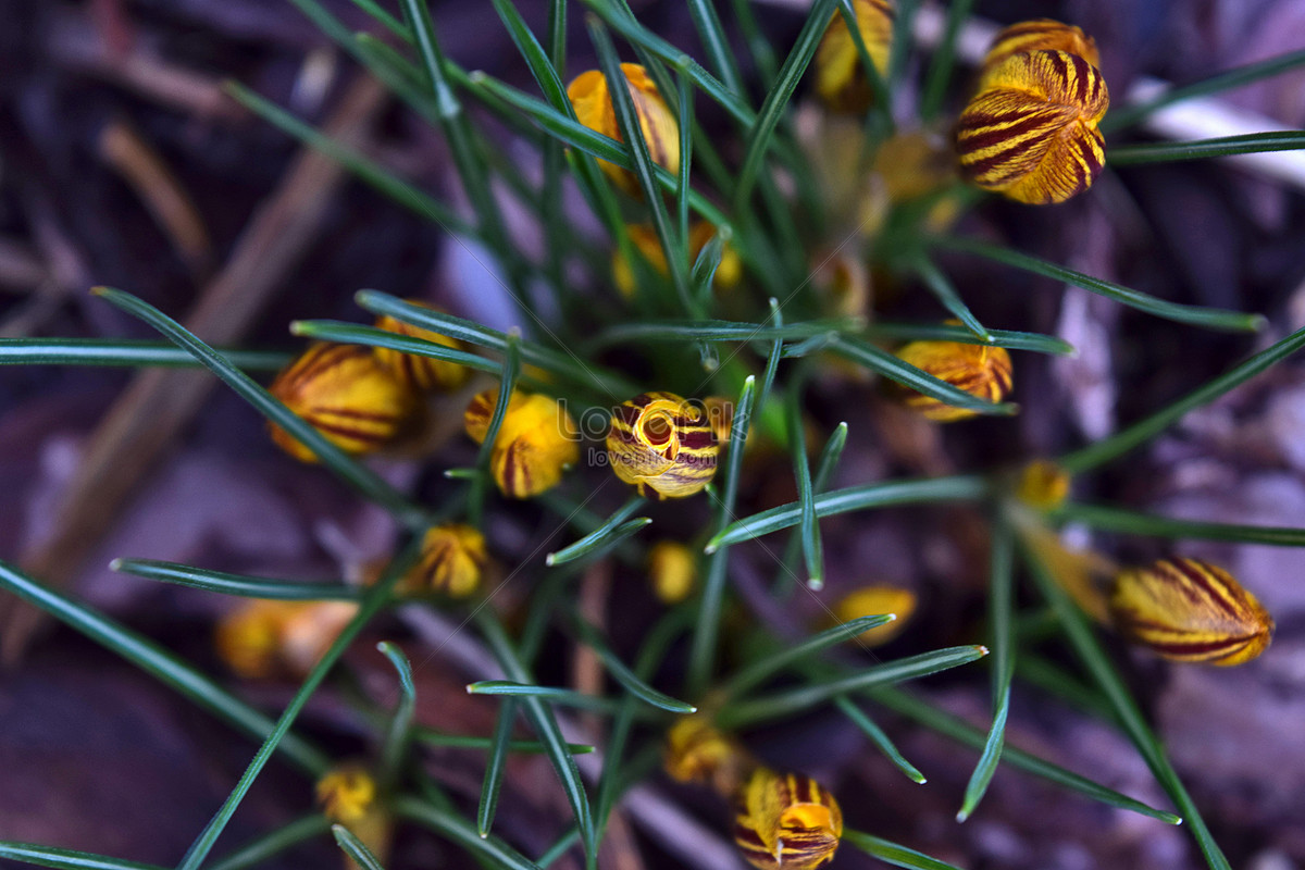 Yellow Flower Plants Photo Imagepicture Free Download