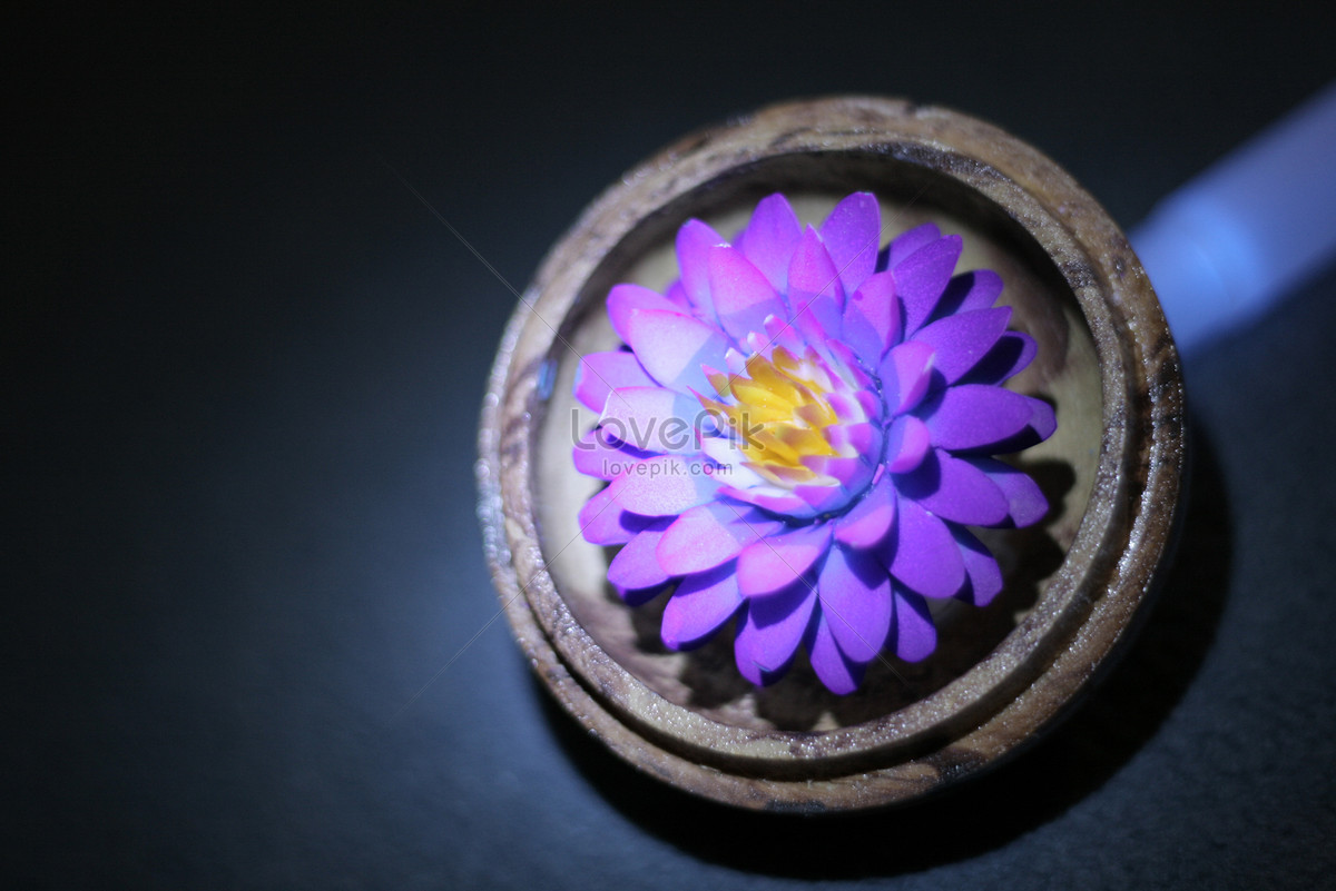 Purple Lotus Flower Photo Imagepicture Free Download