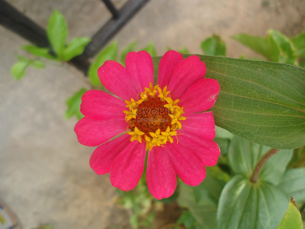 The beautiful flowers in my garden photo imagepicture free download the beautiful flowers in my garden izmirmasajfo