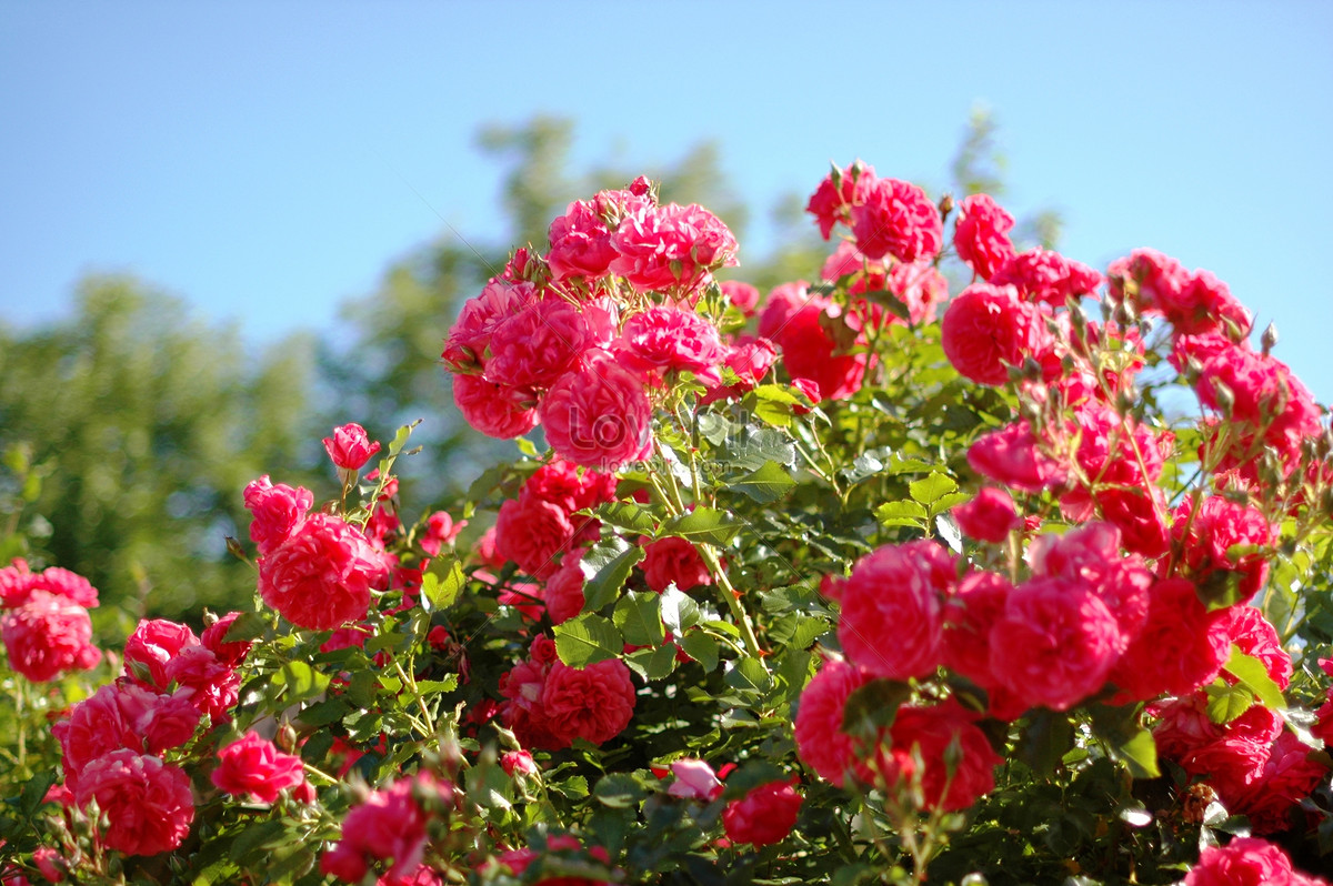 Some beautiful flowers photo imagepicture free download some beautiful flowers izmirmasajfo