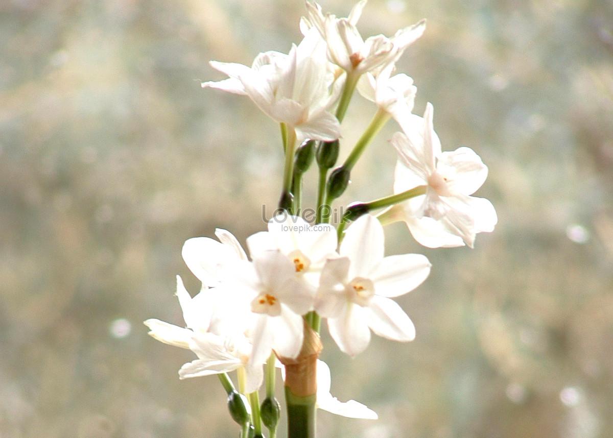 hoa mùa đông mưa lạnh da trắng thủy tiên abudjustready