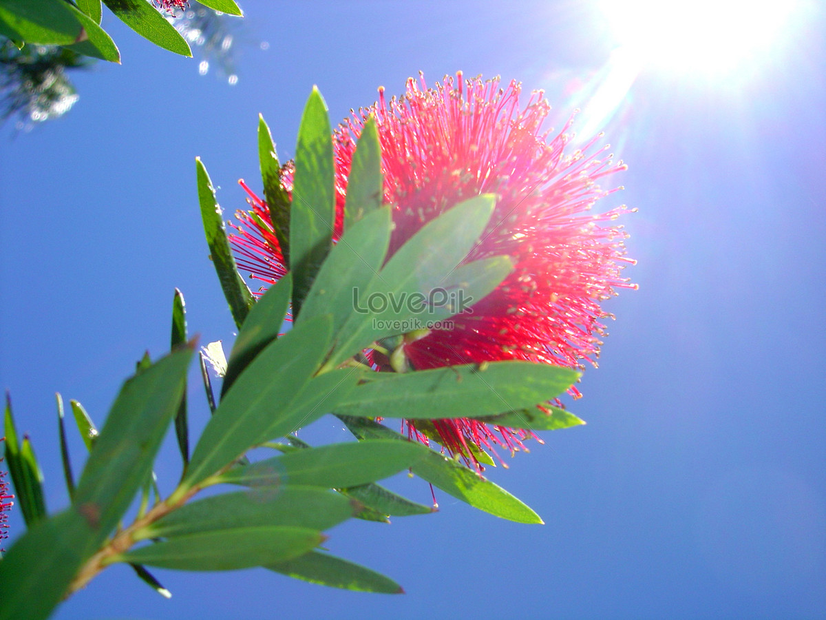 In alice springs near the flowers photo imagepicture free download in alice springs near the flowers mightylinksfo