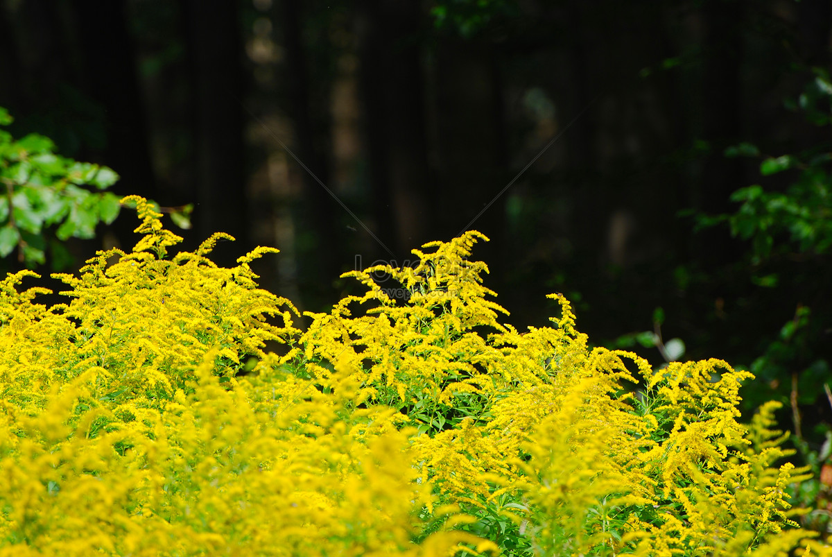 I Wont Come I Mean Even If Asked Yellow Flowers Against Photo