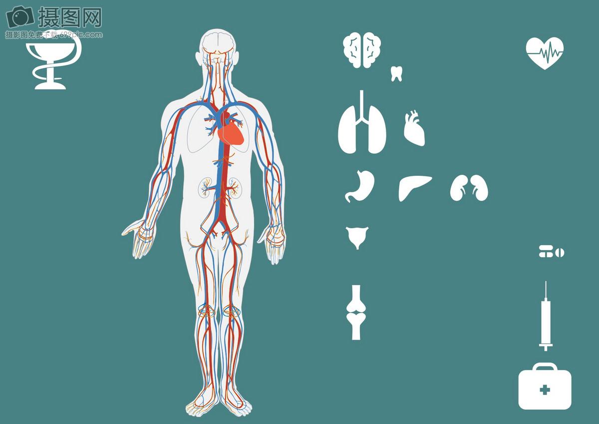 Medical Human Visceral Icons Illustration Imagepicture Free