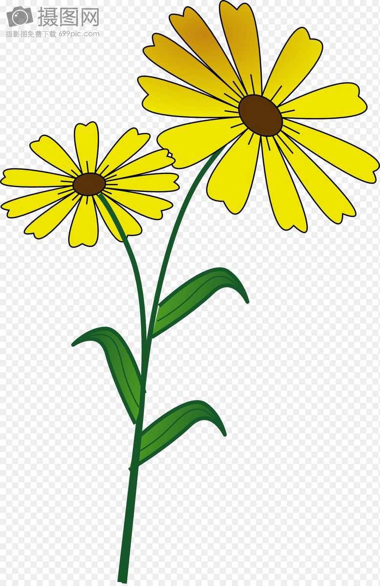 Flowers Daisies Vegetarians Graphics Imagepicture Free Download