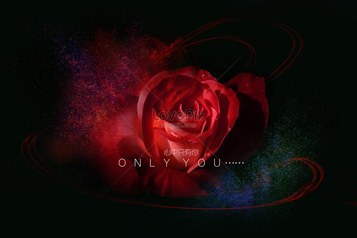 Cool red roses love black background creative image picture free download 400054460 - Cool love images ...