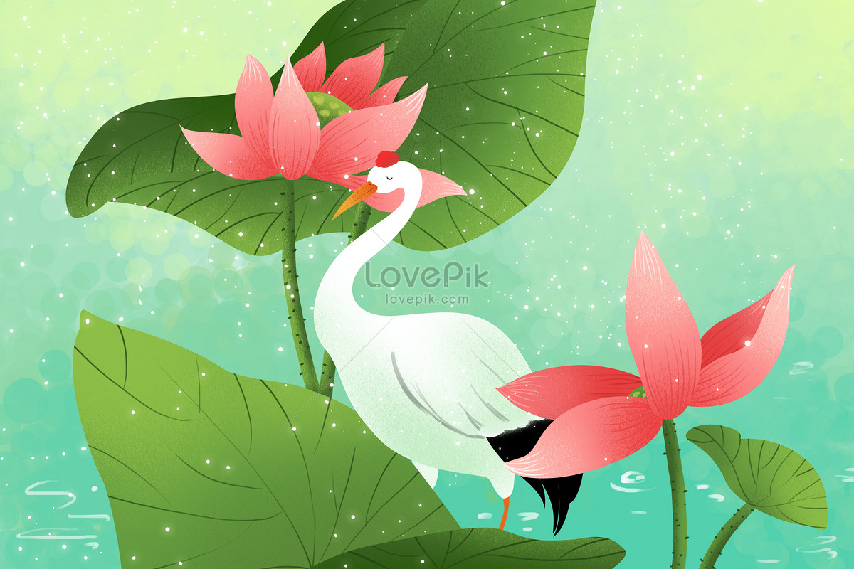Lotus And White Crane Photo Imagepicture Free Download