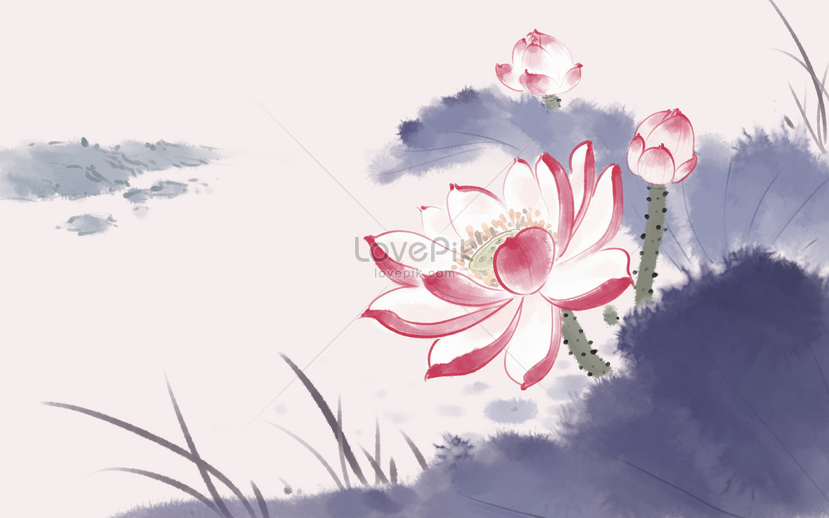 Chinese Lotus Flower Photo Imagepicture Free Download