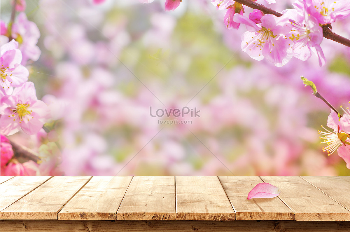 flowers desktop background creative image picture free