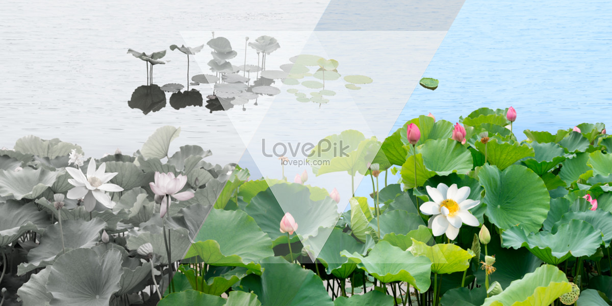 Lotus pond png image_picture free download 400264963_lovepik. Com.