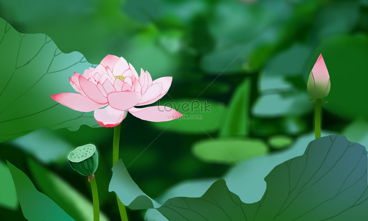 Lotus Flower In Summer Photo Imagepicture Free Download