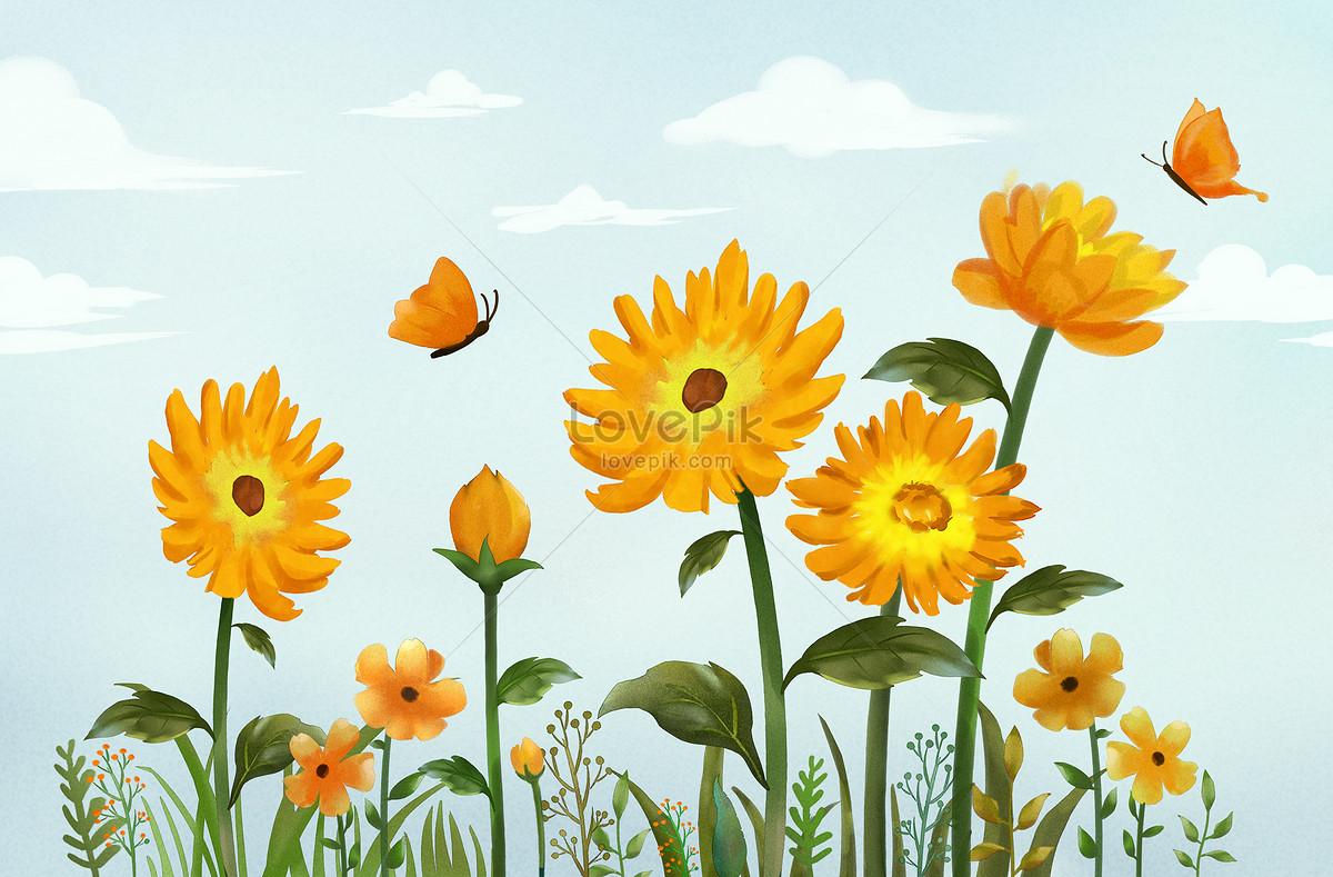 Fresh Sunflower Flower Illustrations Illustration Images Pictures
