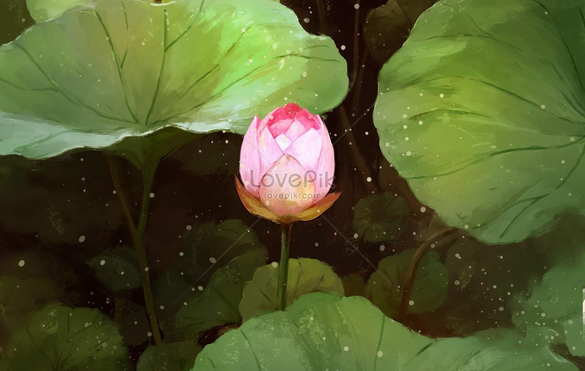Lotus Flower In Bud Illustration Imagepicture Free Download