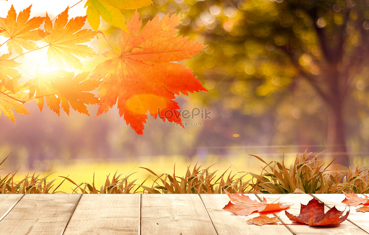 fall background creative image picture free download