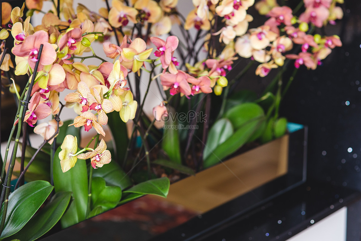 Beautiful Potted Flowers Photo Imagepicture Free Download