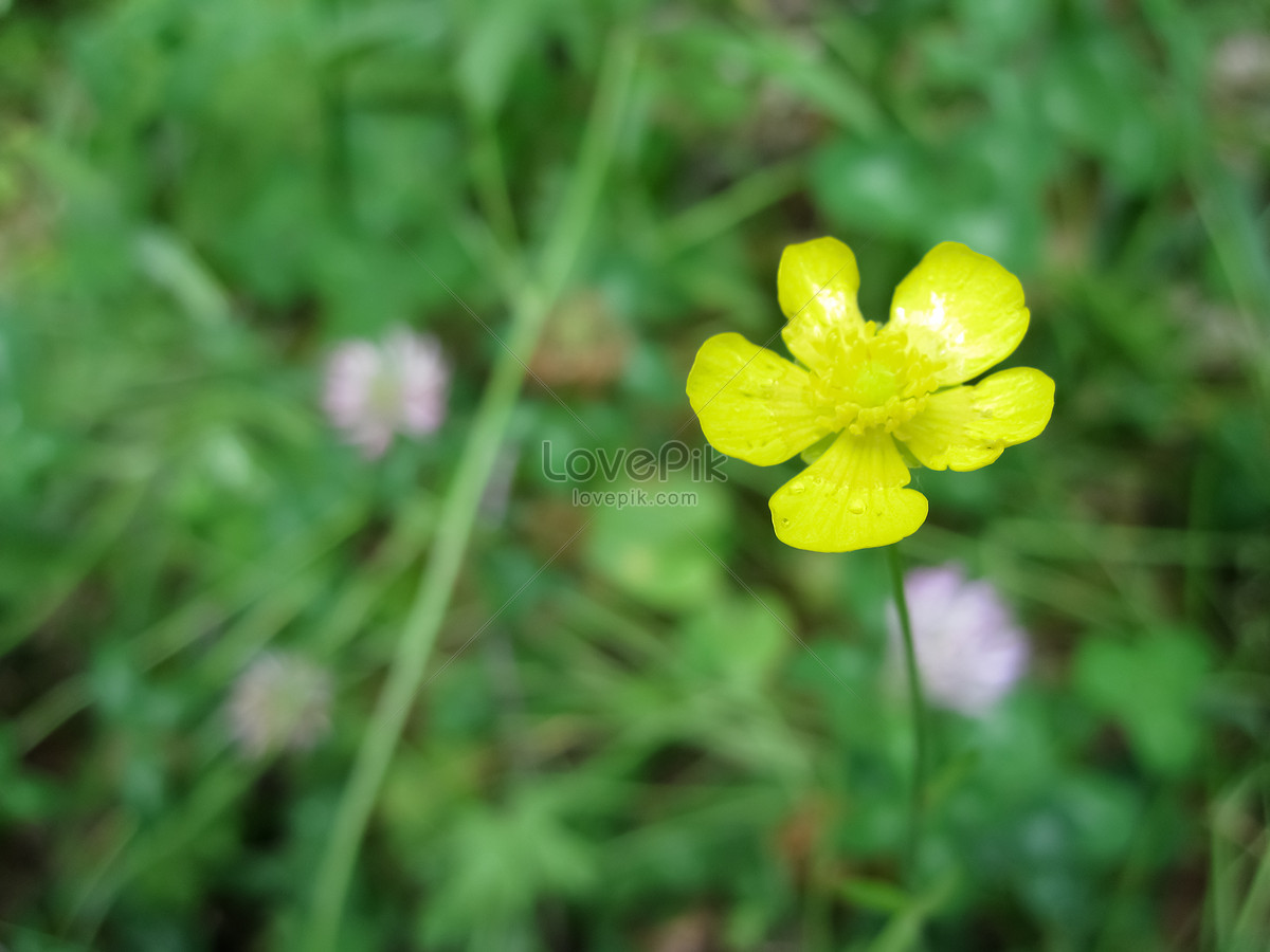 A Small Yellow Flower On The Grass Photo Imagepicture Free Download
