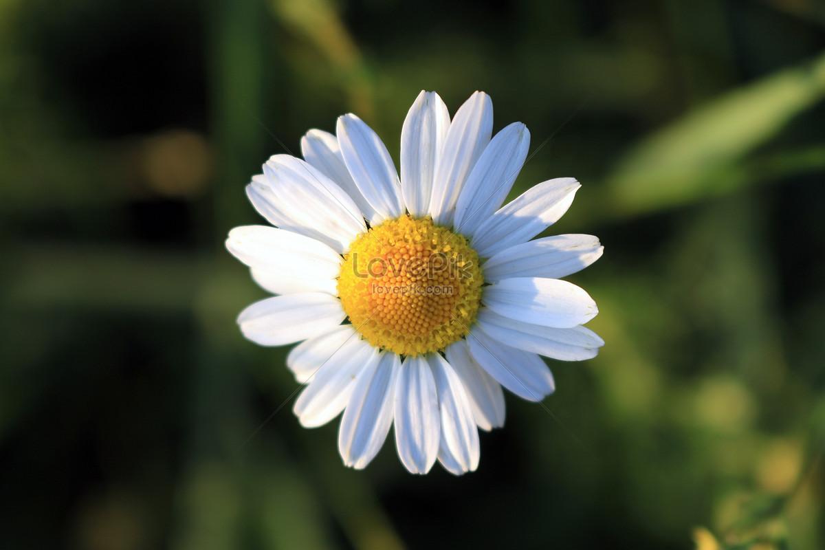 Bunga Kuning Dengan Aster Kecil Gambar Unduh Gratis Foto 500020709 Format Gambar Jpg Lovepik Com