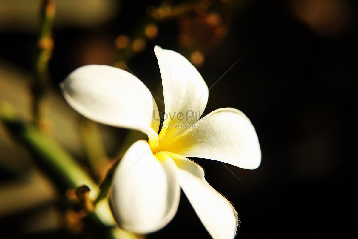 Pale yellow flowers photo imagepicture free download pale yellow flowers mightylinksfo