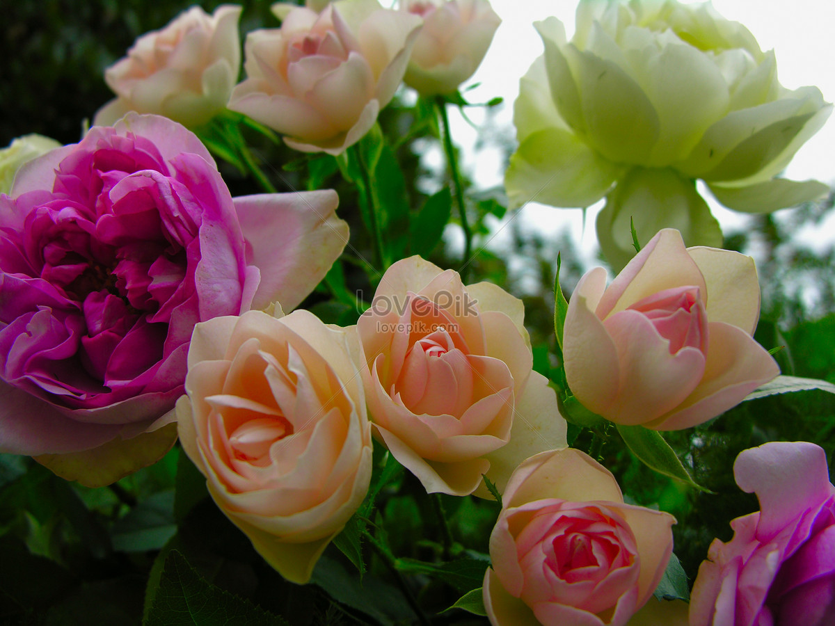 A Lot Of Beautiful Flowers Photo Imagepicture Free Download