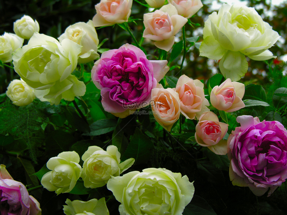A lot of beautiful flowers photo imagepicture free download a lot of beautiful flowers izmirmasajfo