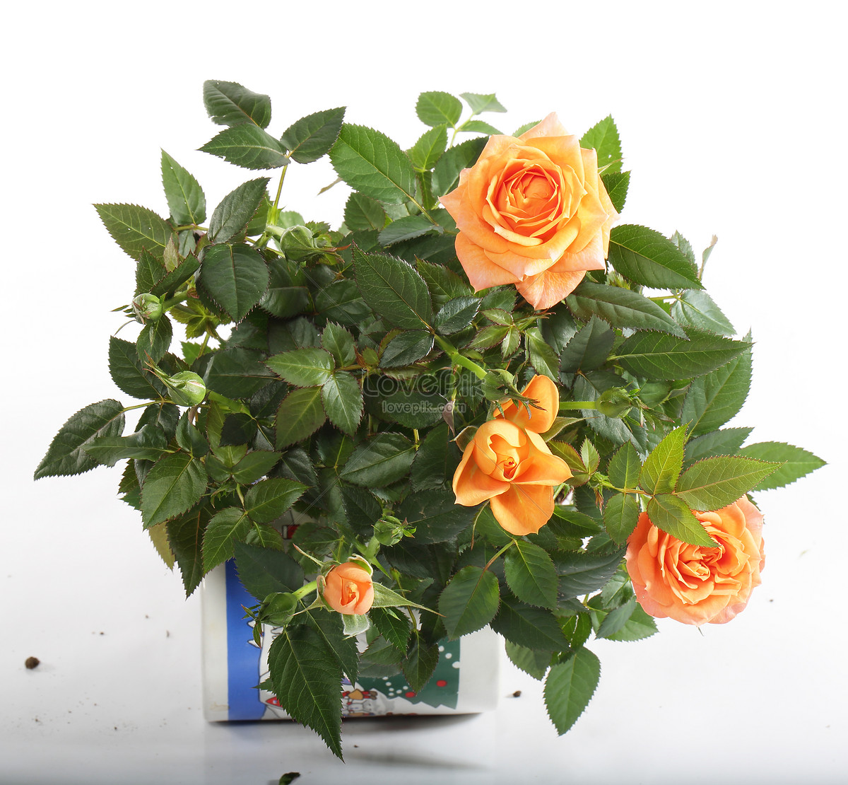 Beautiful Flowers In Potted Plants Photo Imagepicture Free Download