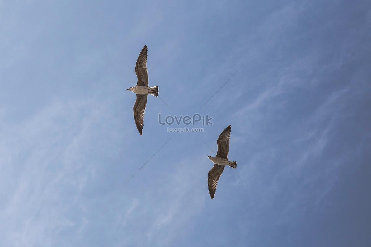 Dos Palomas Blancas Volando Imagen Descargar Foto 500052634jpg
