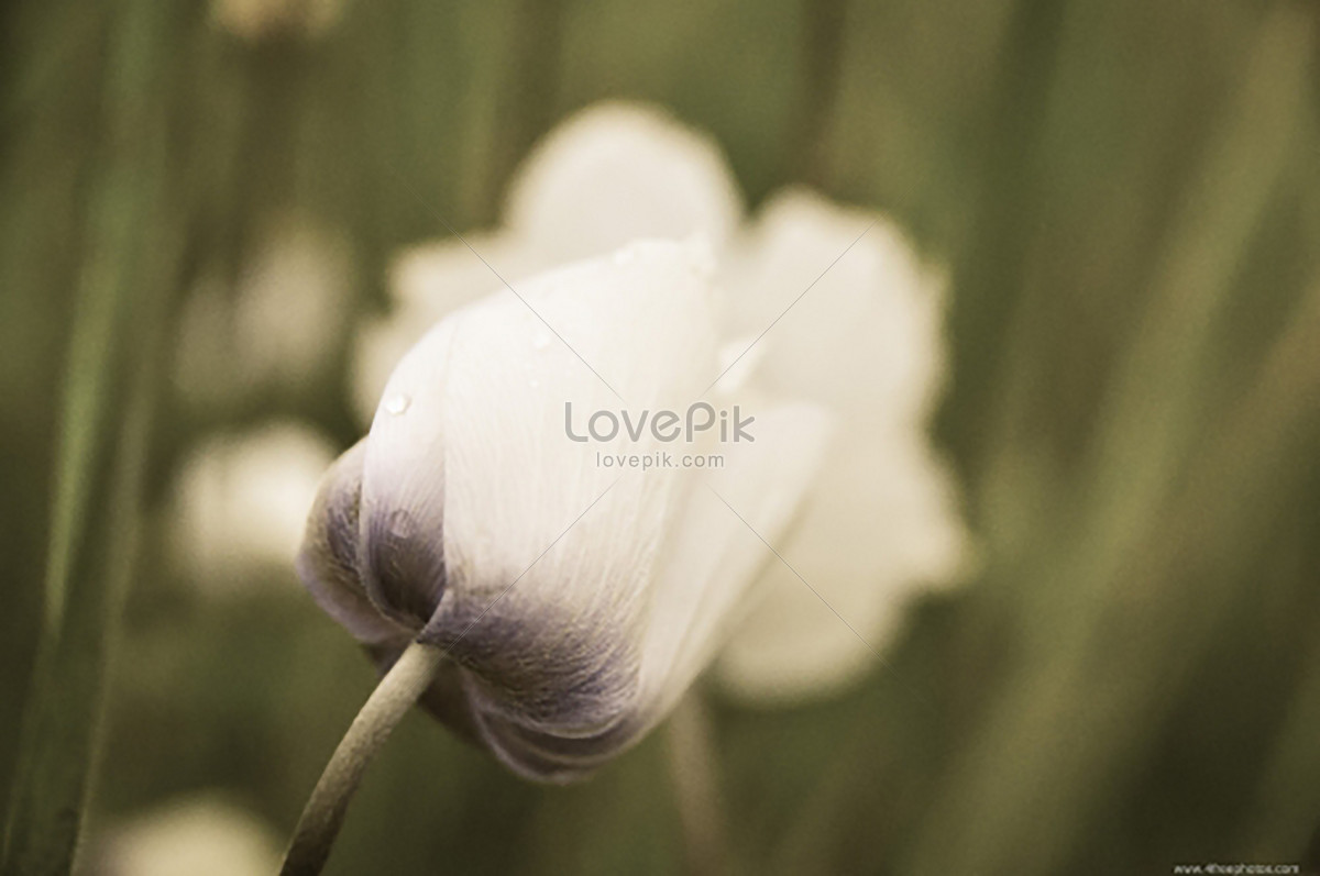 white flowers photo image picture free download 500054832