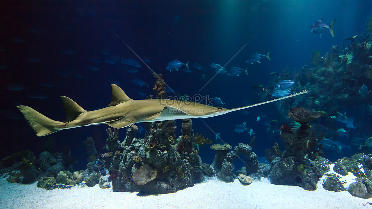 76+ Gambar Abstrak Ikan Hiu Paling Bagus
