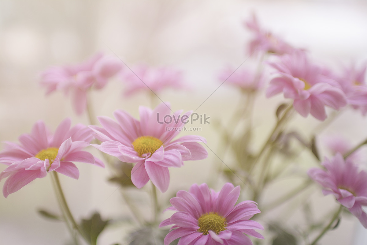 A Pale Pink Flower Photo Imagepicture Free Download