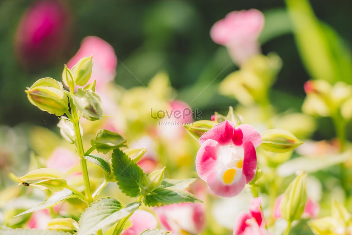 Frescas Naturales Bellas Plantas Verdes Y Flores Imagen