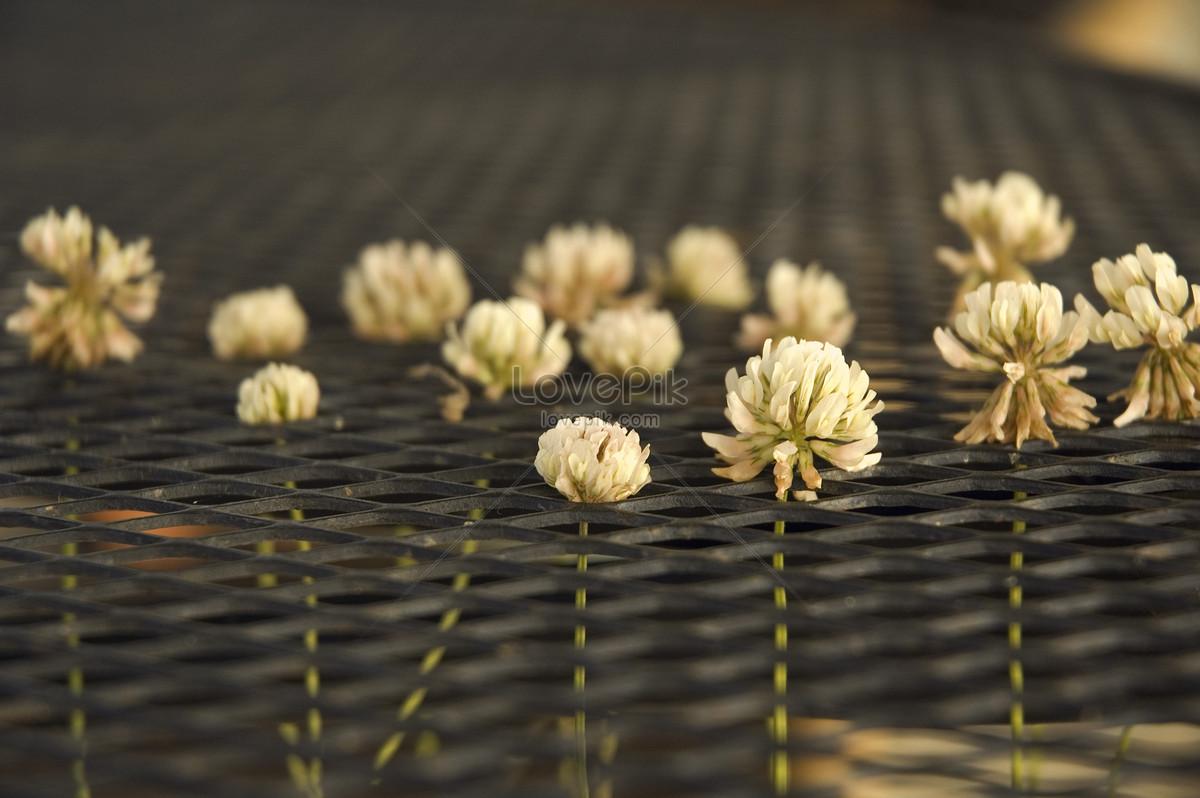Bunga Hidroponik Gambar Unduh Gratis Foto 500121477 Format