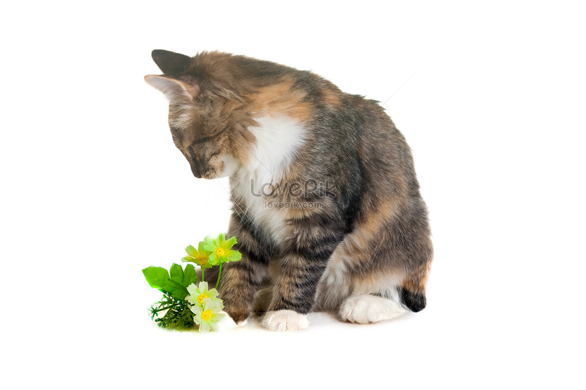 mèo nhìn những bông hoa