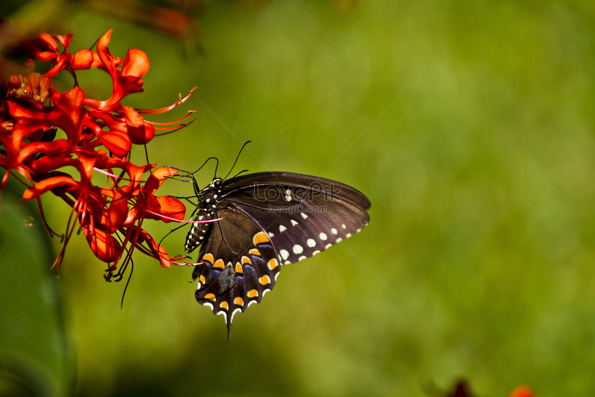 butterflies on flowers photo image picture free download
