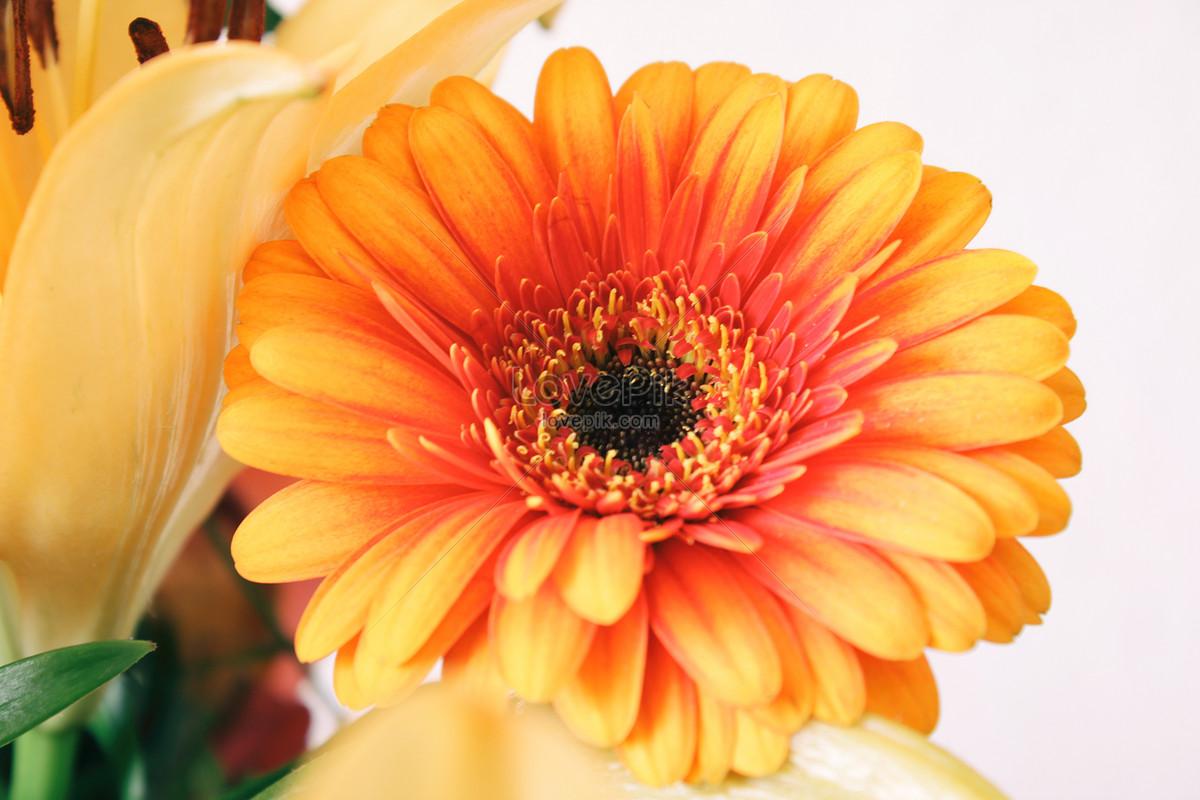 çiçek Açan çiçekler Resimfotoğraf Numarası 500224822trlovepikcom