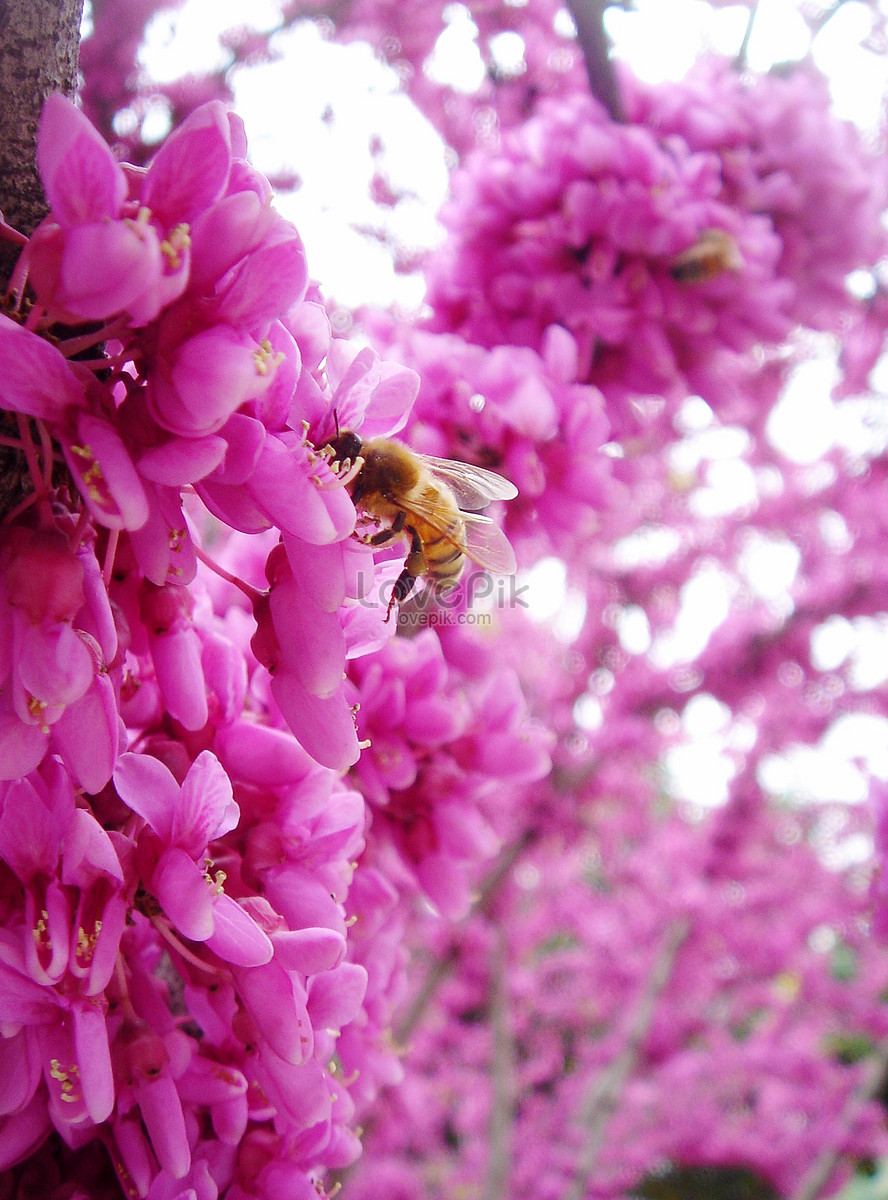 Spring flowers and bees photo imagepicture free download spring flowers and bees mightylinksfo