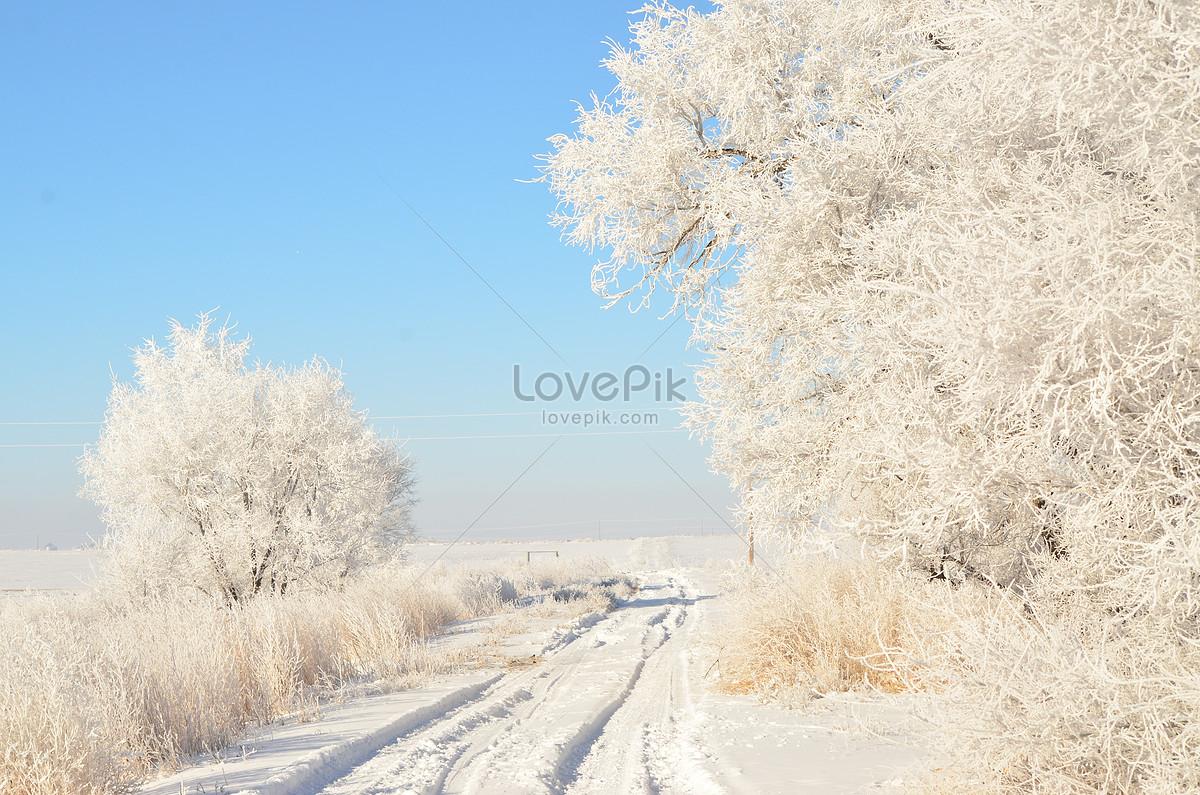 a white winter scene