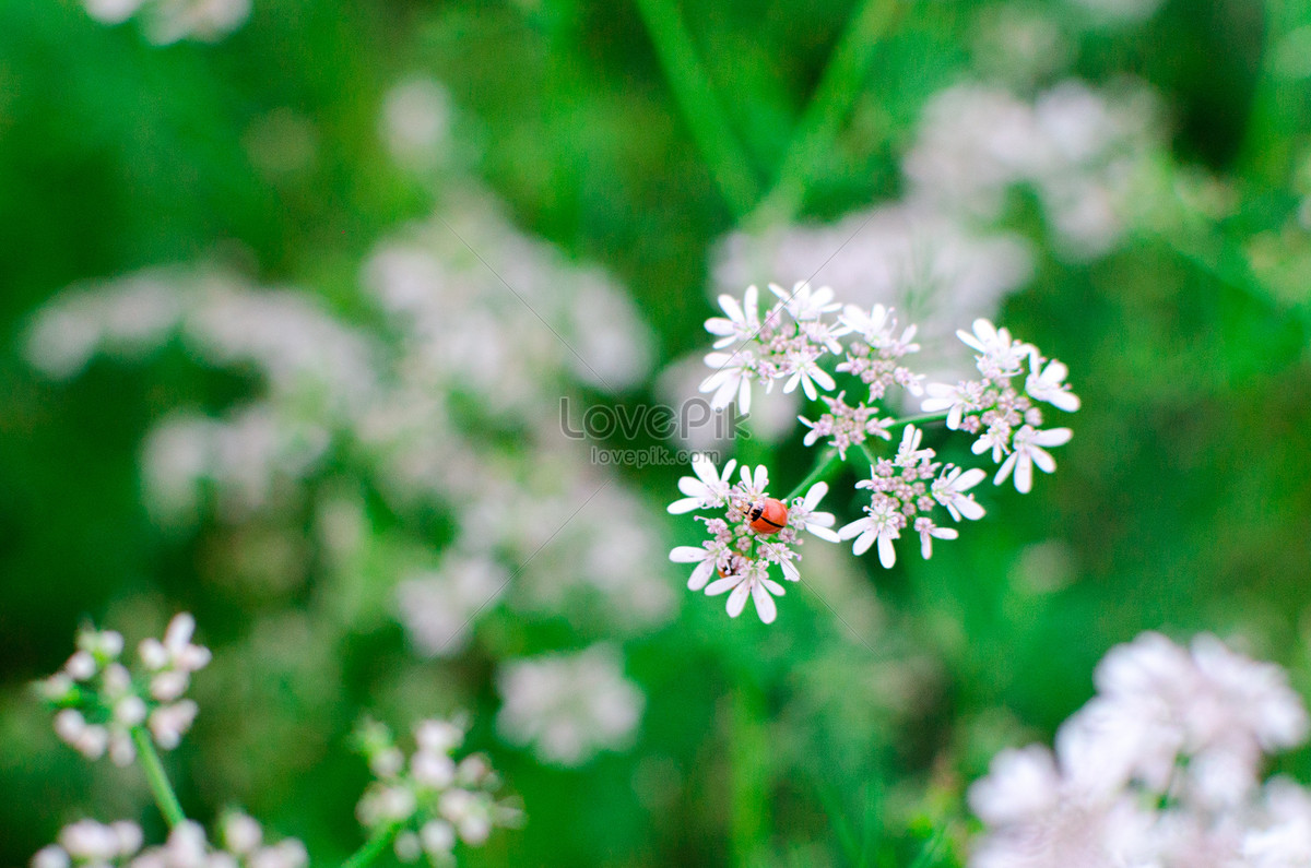 flowers in the field photo image picture free download