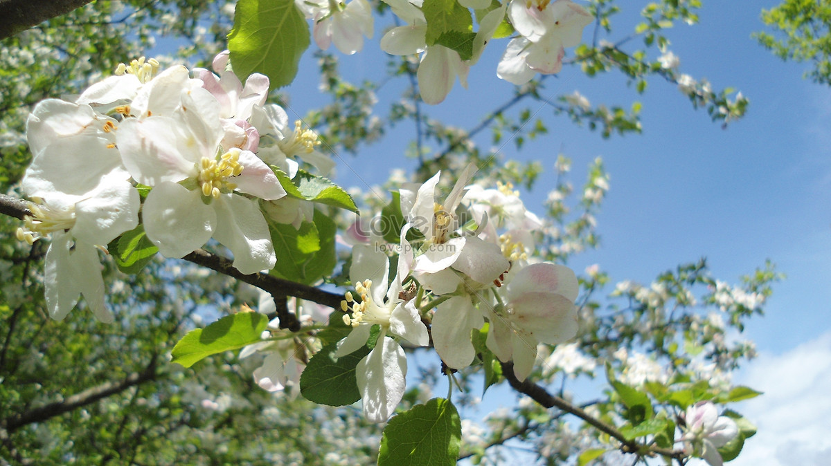 Flowers Blooming In Spring Photo Imagepicture Free Download